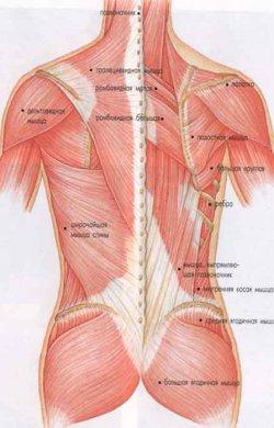 приемы массажа спины в картинках