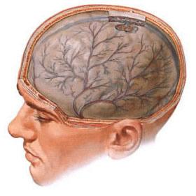 Диагноз невролога дэп 2 степени
