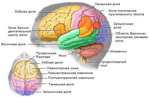 Объемный процесс головного мозга что это такое